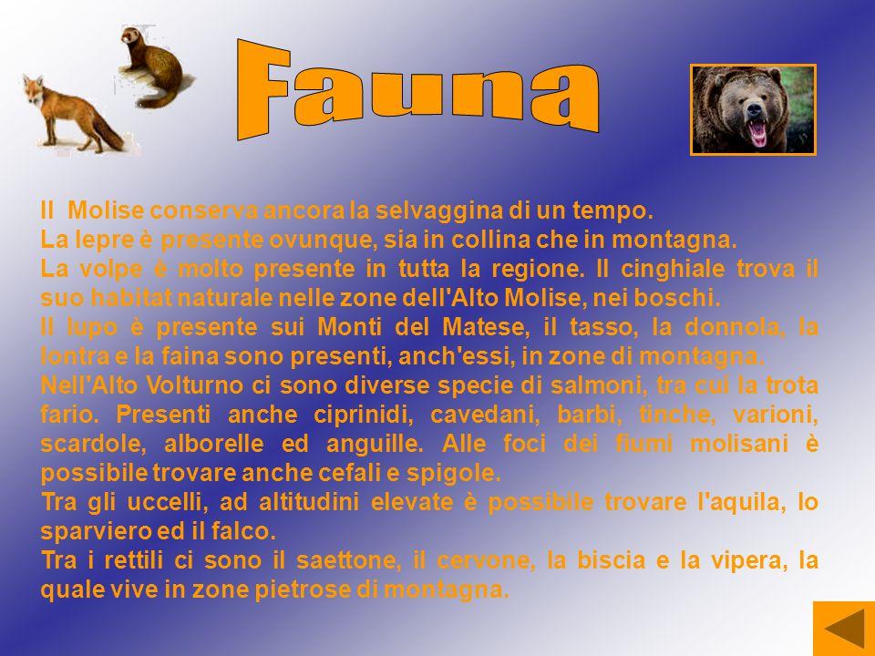 Fauna Il Molise conserva ancora la selvaggina di un tempo.