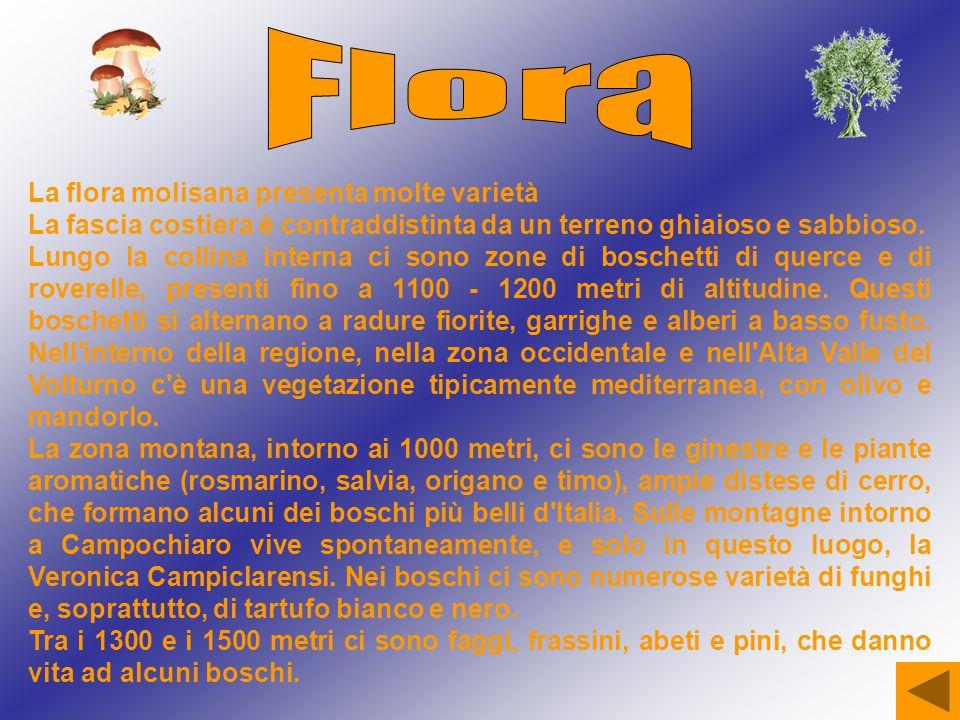 Flora La flora molisana presenta molte varietà