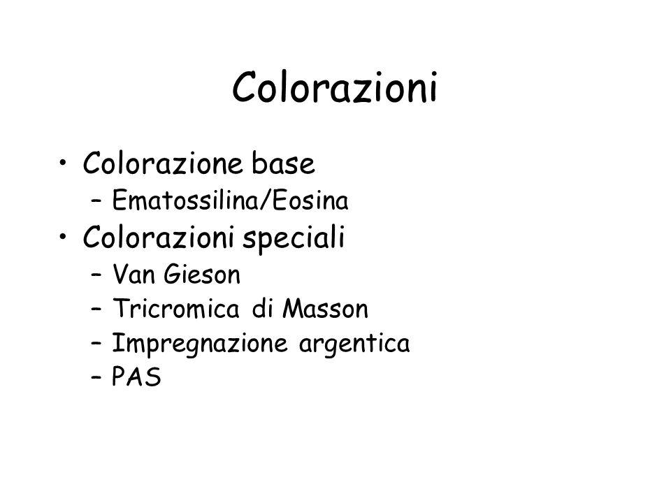 Colorazioni Colorazione base Colorazioni speciali Ematossilina/Eosina
