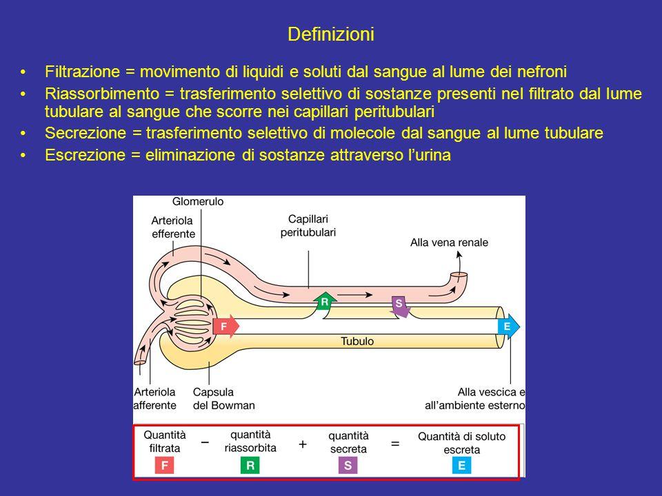 Definizioni Filtrazione = movimento di liquidi e soluti dal sangue al lume dei nefroni.