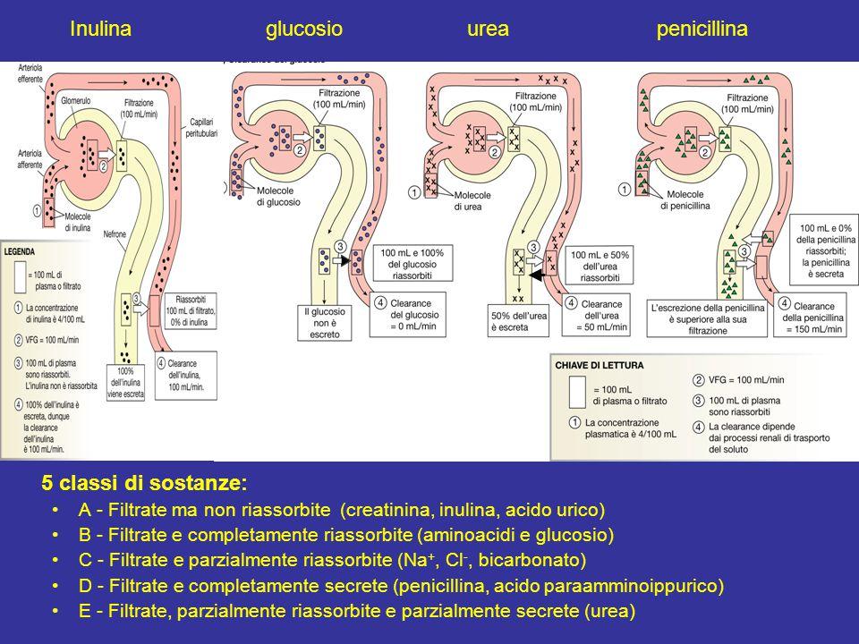 5 classi di sostanze: Inulina glucosio urea penicillina