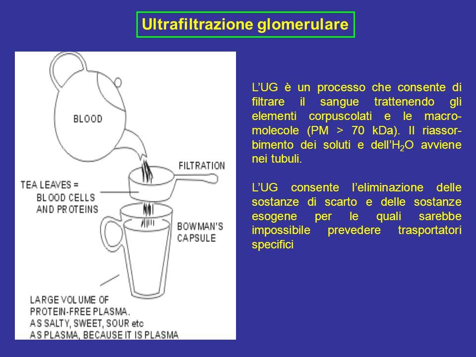 Ultrafiltrazione glomerulare