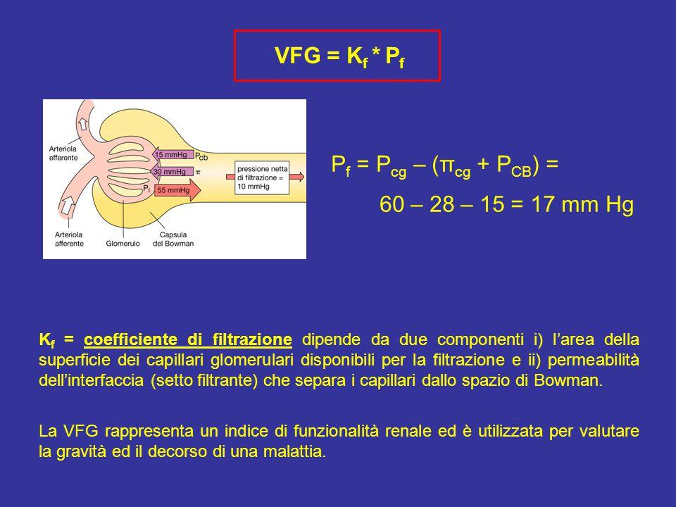 VFG = Kf * Pf Pf = Pcg – (πcg + PCB) = 60 – 28 – 15 = 17 mm Hg