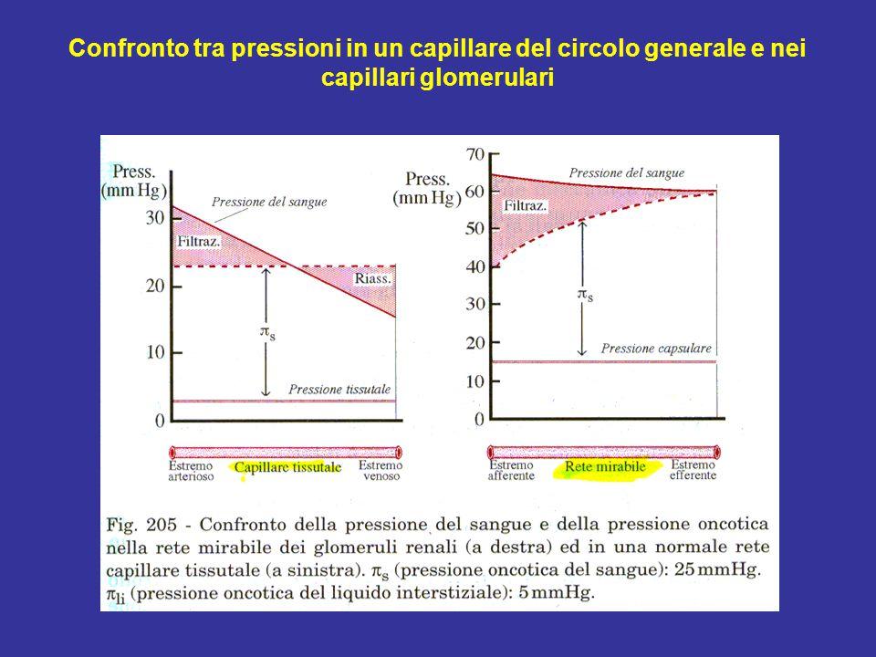 Confronto tra pressioni in un capillare del circolo generale e nei capillari glomerulari