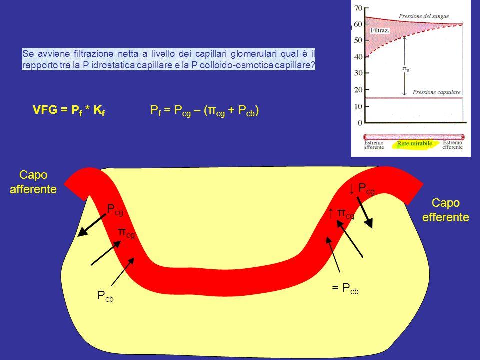 VFG = Pf * Kf Pf = Pcg – (πcg + Pcb) Capo afferente ↓ Pcg