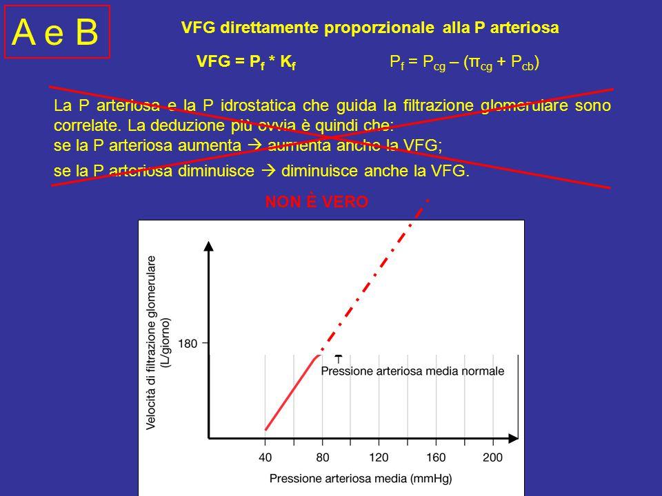A e B VFG direttamente proporzionale alla P arteriosa VFG = Pf * Kf