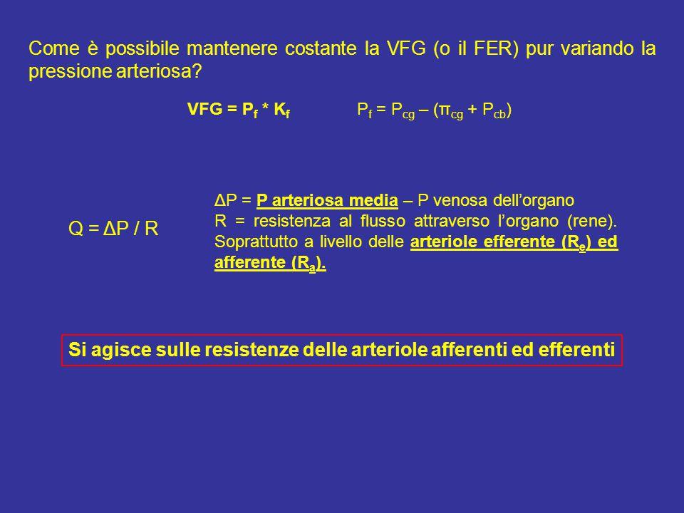 Si agisce sulle resistenze delle arteriole afferenti ed efferenti