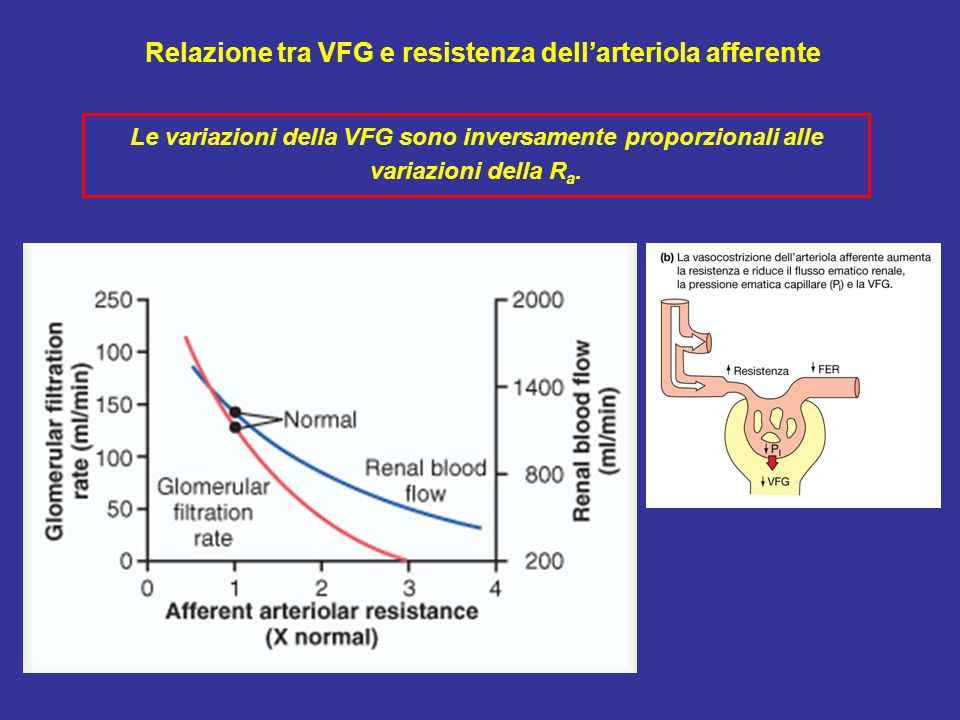 Relazione tra VFG e resistenza dell'arteriola afferente