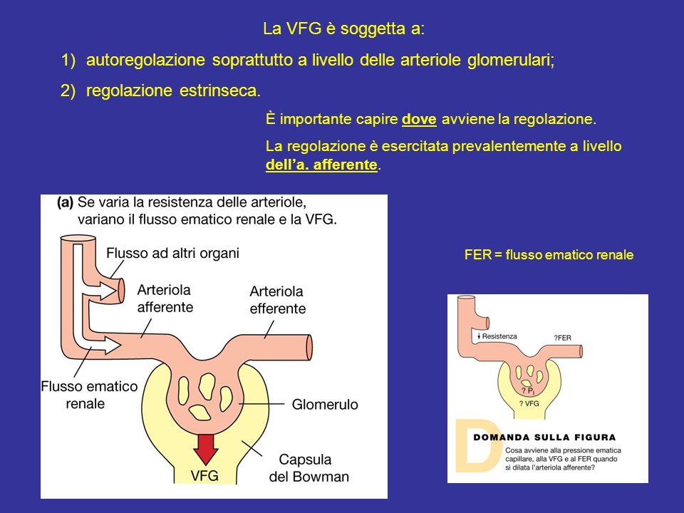 autoregolazione soprattutto a livello delle arteriole glomerulari;