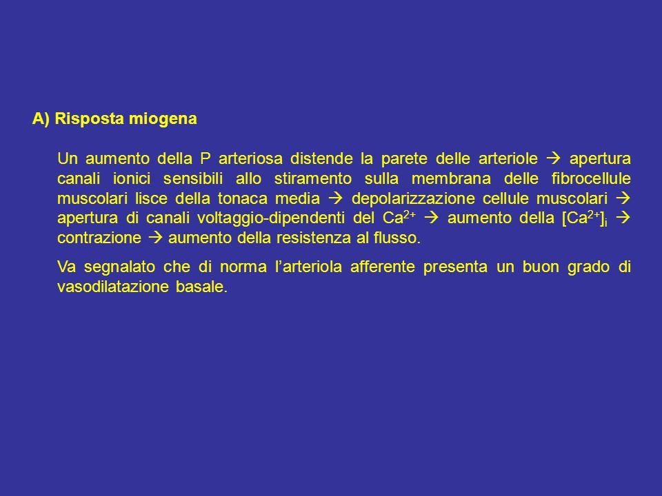 A) Risposta miogena