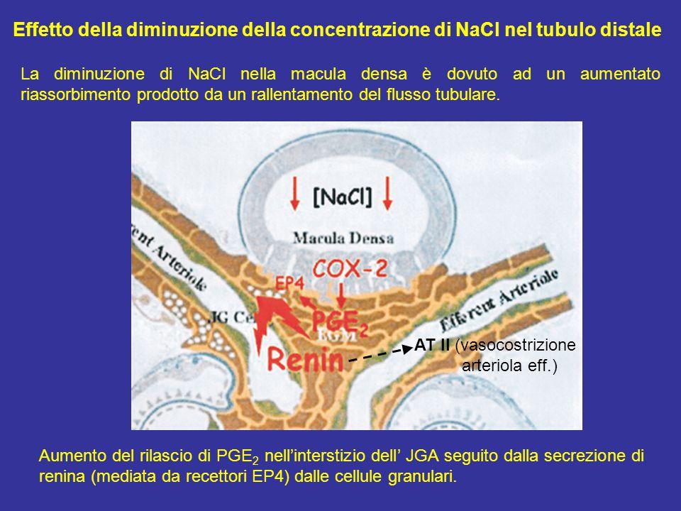 Effetto della diminuzione della concentrazione di NaCl nel tubulo distale