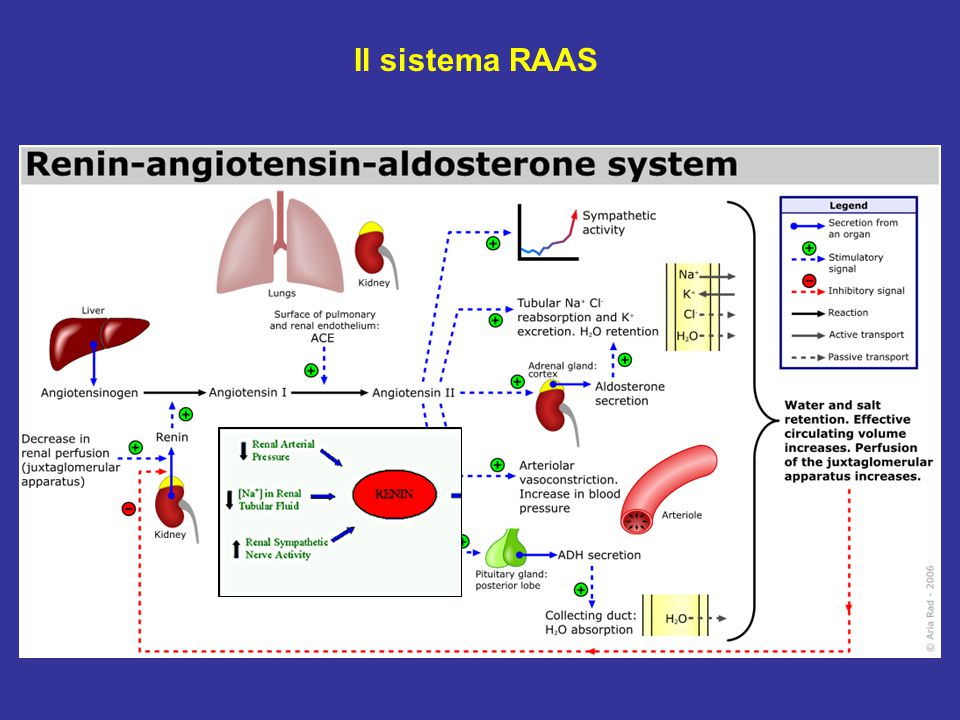 Il sistema RAAS