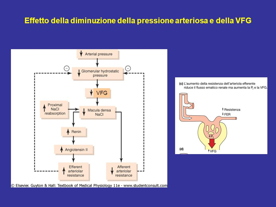 Effetto della diminuzione della pressione arteriosa e della VFG