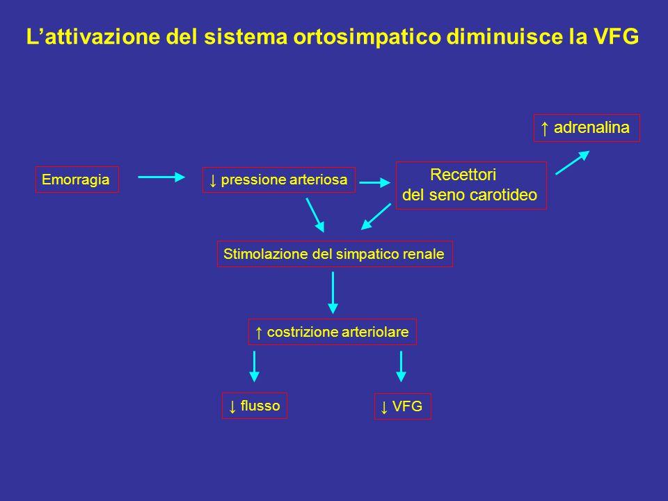 L'attivazione del sistema ortosimpatico diminuisce la VFG