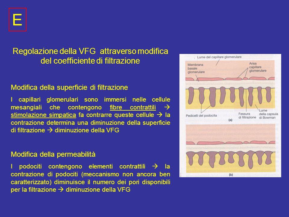 E Regolazione della VFG attraverso modifica del coefficiente di filtrazione. Modifica della superficie di filtrazione.