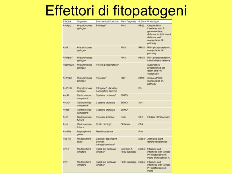 Effettori di fitopatogeni