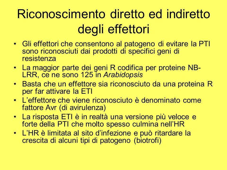 Riconoscimento diretto ed indiretto degli effettori