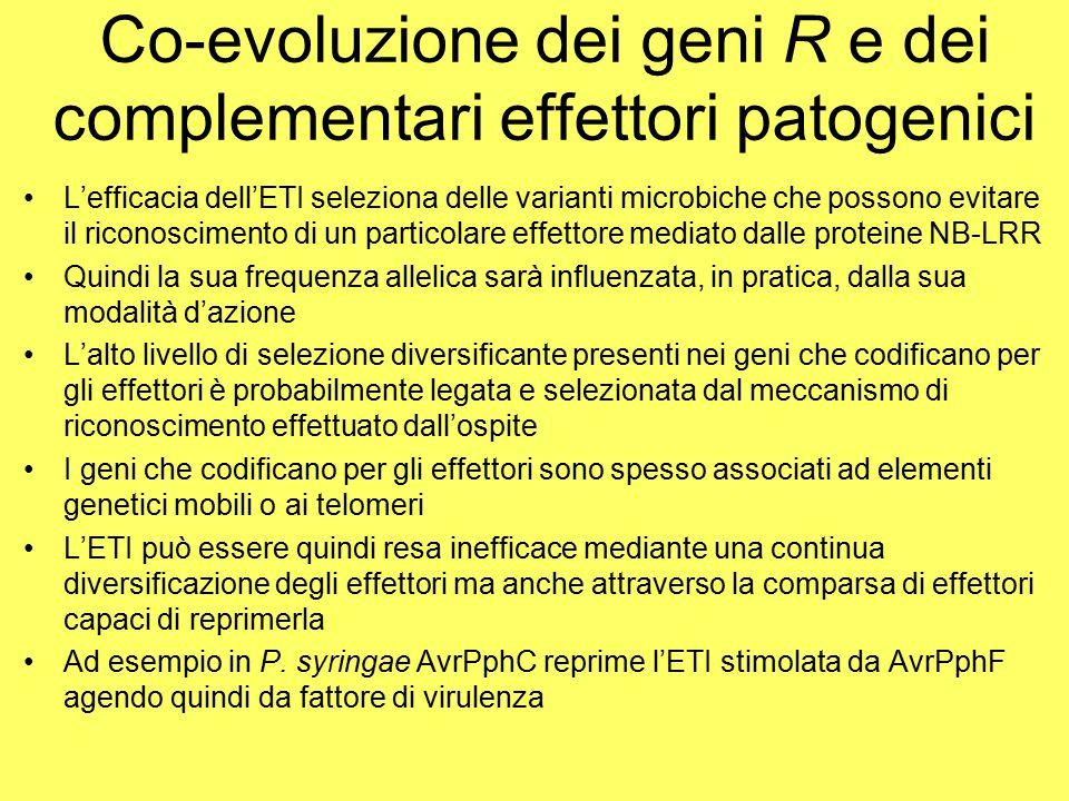 Co-evoluzione dei geni R e dei complementari effettori patogenici