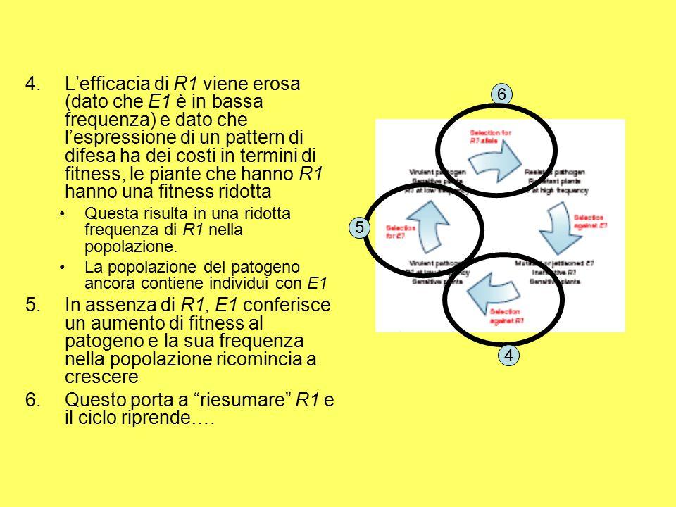 Questo porta a riesumare R1 e il ciclo riprende….