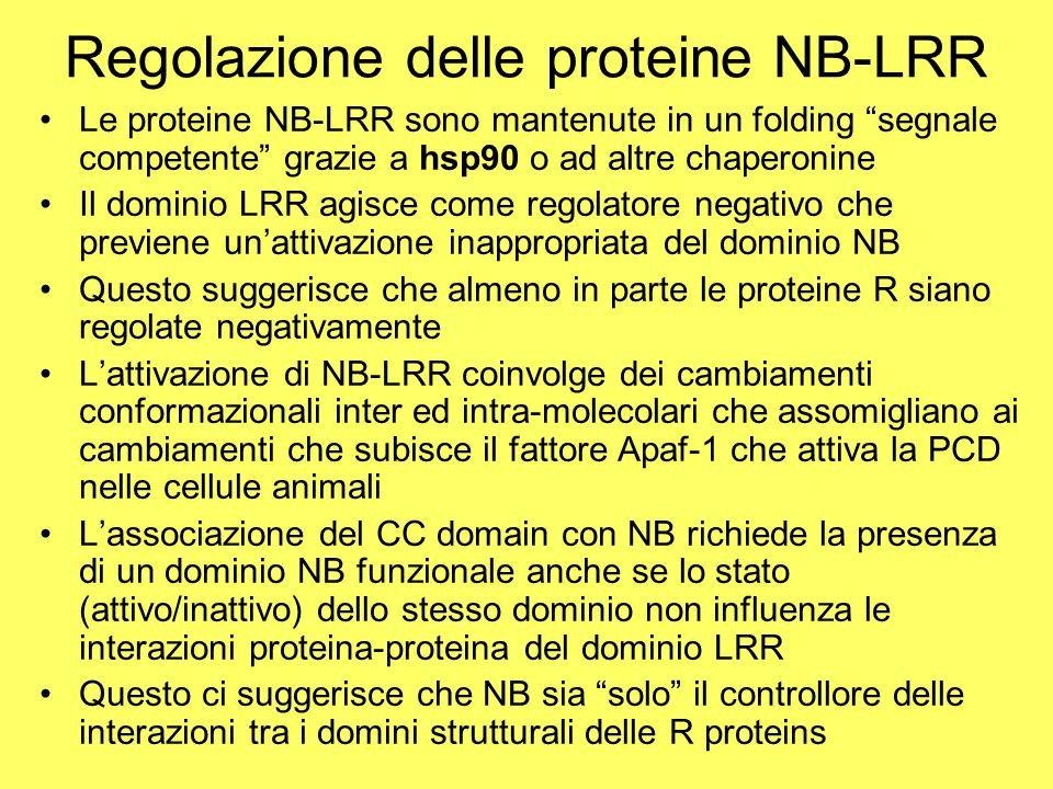 Regolazione delle proteine NB-LRR