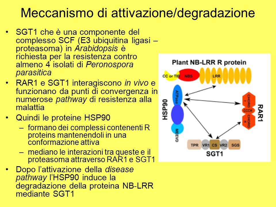 Meccanismo di attivazione/degradazione