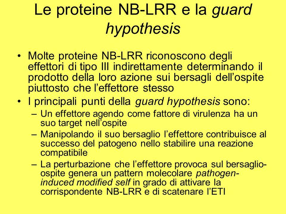 Le proteine NB-LRR e la guard hypothesis
