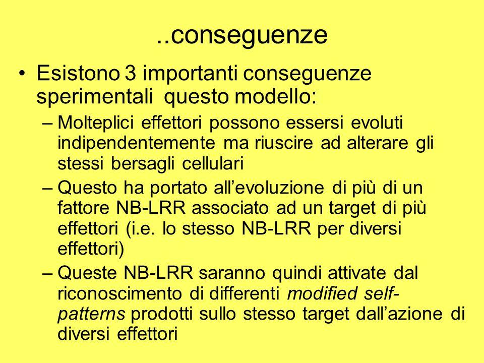 ..conseguenze Esistono 3 importanti conseguenze sperimentali questo modello: