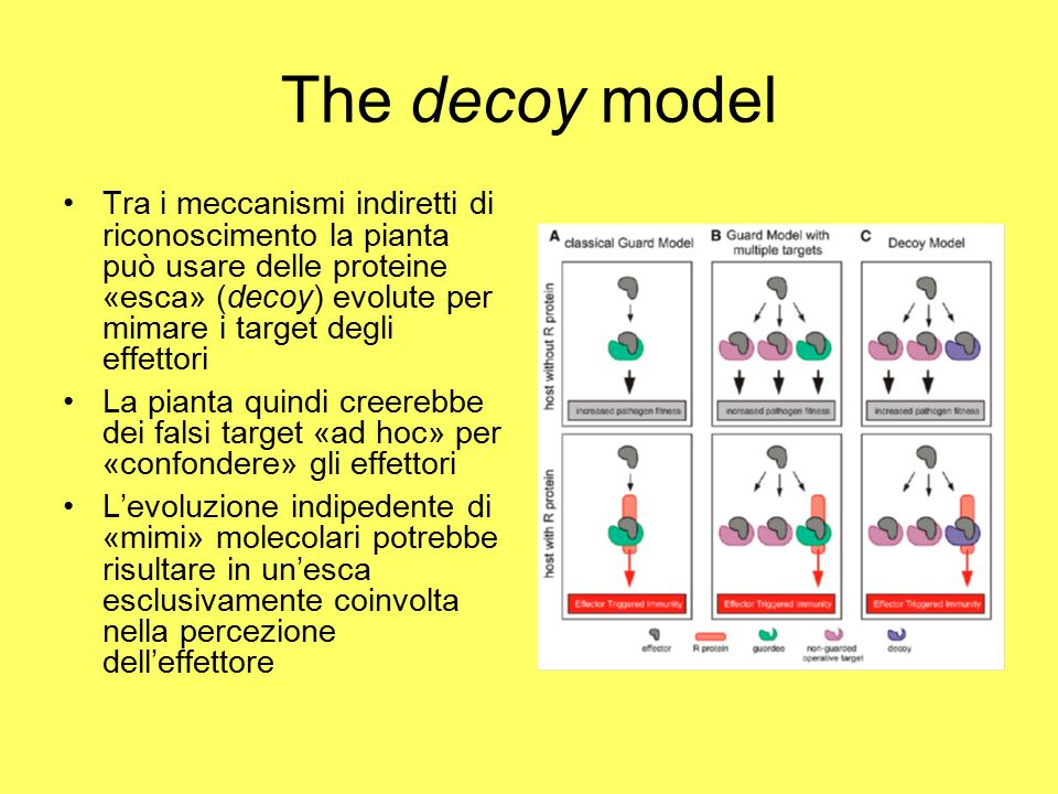 The decoy model