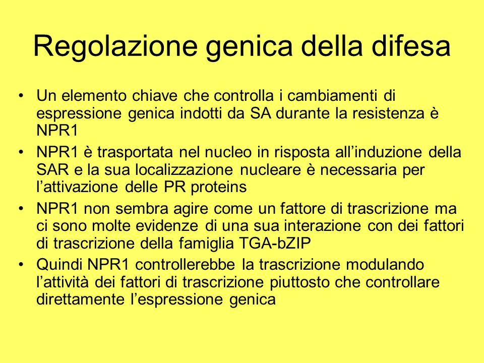 Regolazione genica della difesa