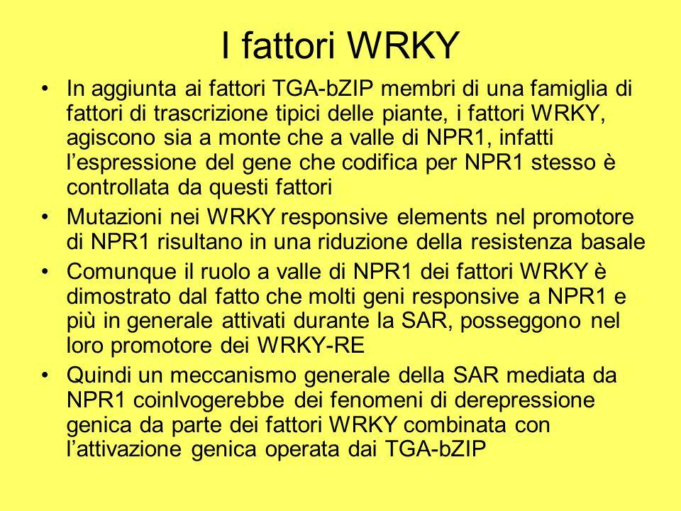 I fattori WRKY
