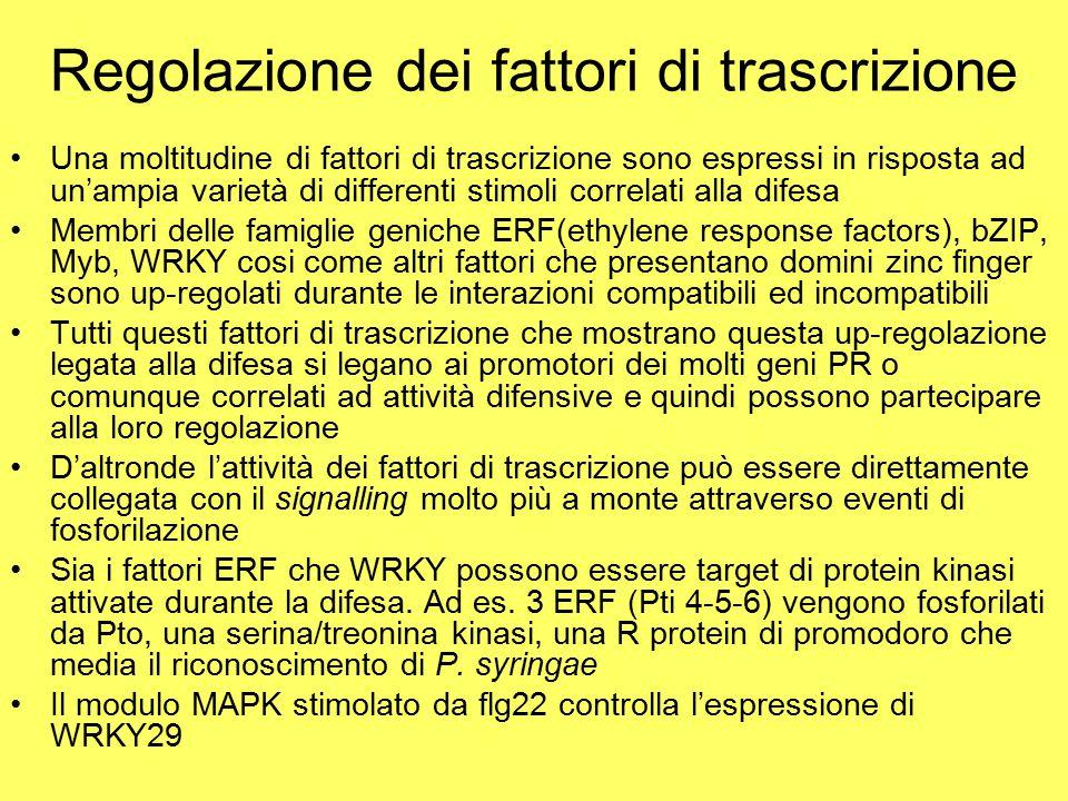 Regolazione dei fattori di trascrizione