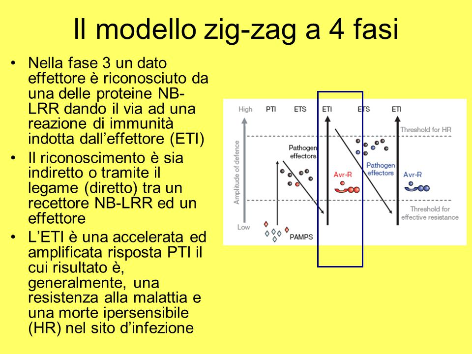 Il modello zig-zag a 4 fasi