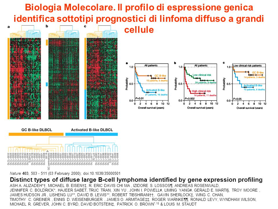 Biologia Molecolare. Il profilo di espressione genica identifica sottotipi prognostici di linfoma diffuso a grandi cellule