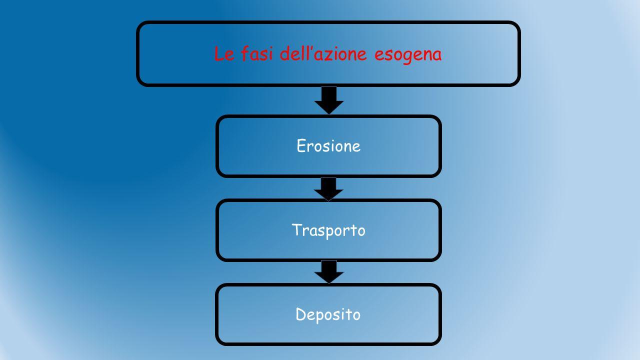 Le fasi dell'azione esogena