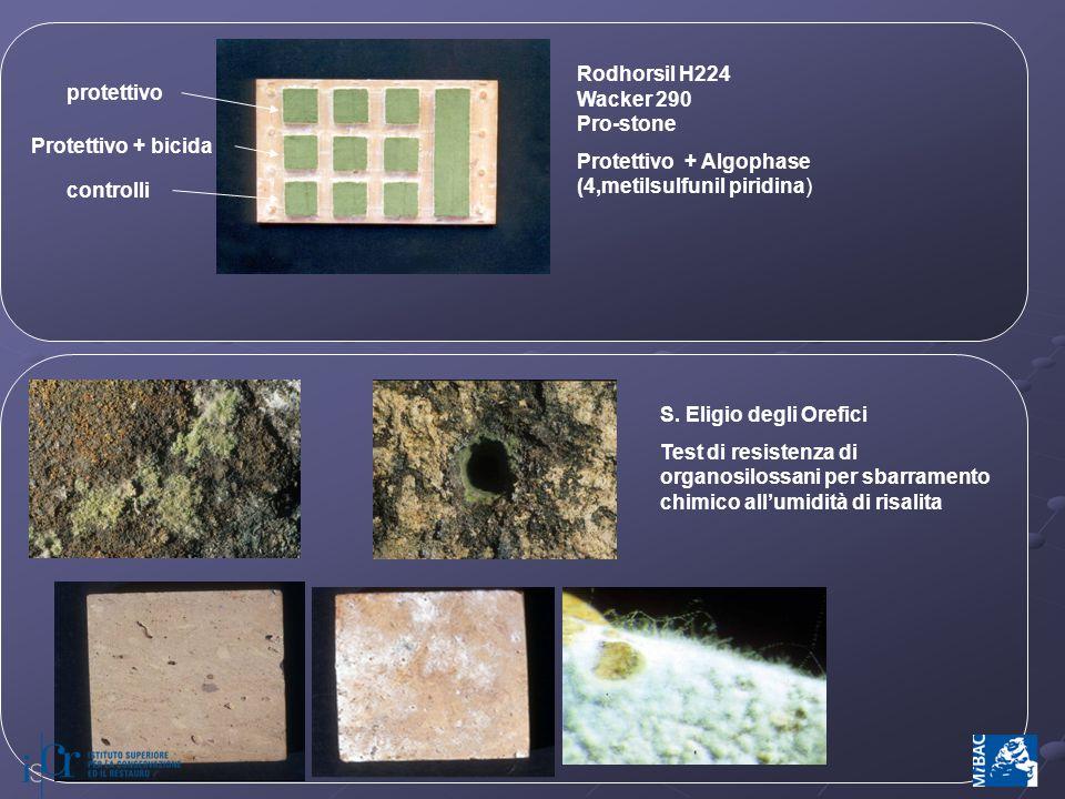 protettivo Protettivo + bicida. controlli. Rodhorsil H224. Wacker 290. Pro-stone. Protettivo + Algophase (4,metilsulfunil piridina)