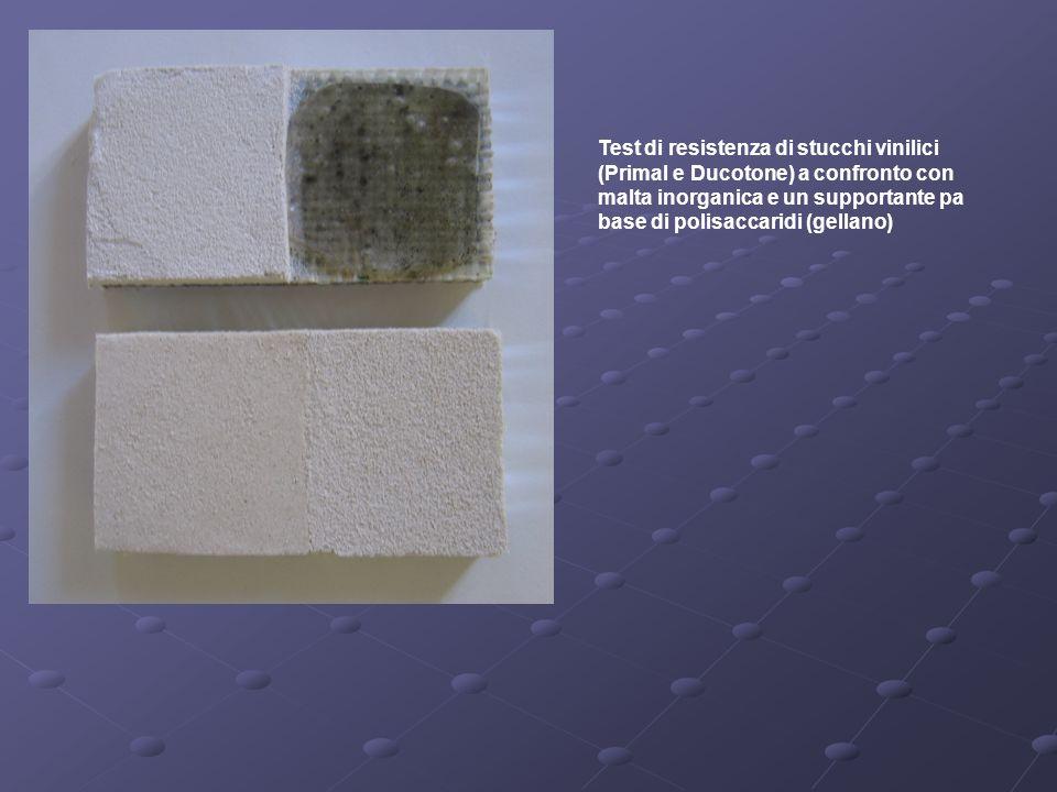 Test di resistenza di stucchi vinilici (Primal e Ducotone) a confronto con malta inorganica e un supportante pa base di polisaccaridi (gellano)