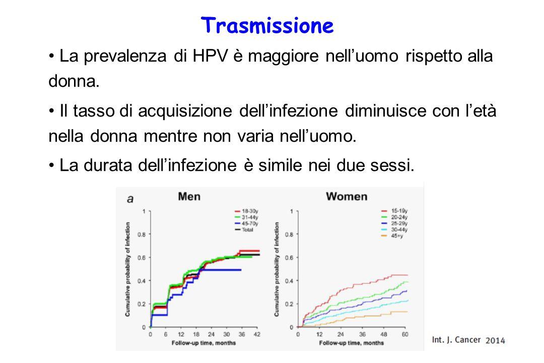 Trasmissione La prevalenza di HPV è maggiore nell'uomo rispetto alla donna.