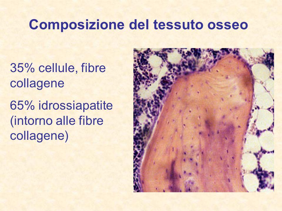 Composizione del tessuto osseo
