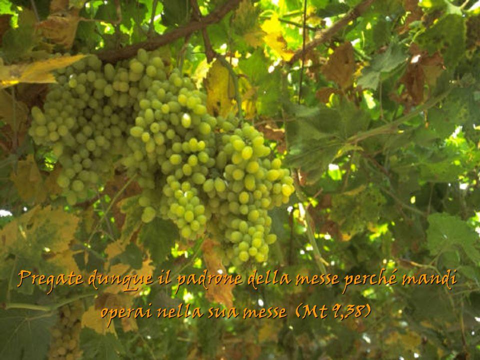 Pregate dunque il padrone della messe perché mandi operai nella sua messe (Mt 9,38)