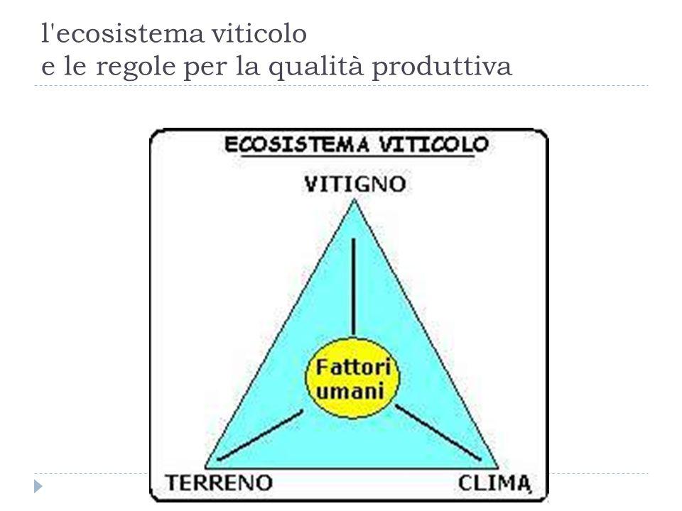 l ecosistema viticolo e le regole per la qualità produttiva