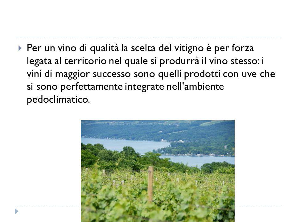 Per un vino di qualità la scelta del vitigno è per forza legata al territorio nel quale si produrrà il vino stesso: i vini di maggior successo sono quelli prodotti con uve che si sono perfettamente integrate nell ambiente pedoclimatico.