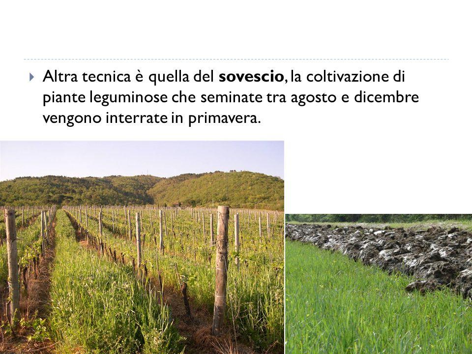 Altra tecnica è quella del sovescio, la coltivazione di piante leguminose che seminate tra agosto e dicembre vengono interrate in primavera.
