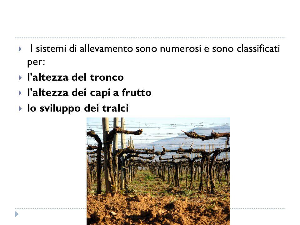 I sistemi di allevamento sono numerosi e sono classificati per: