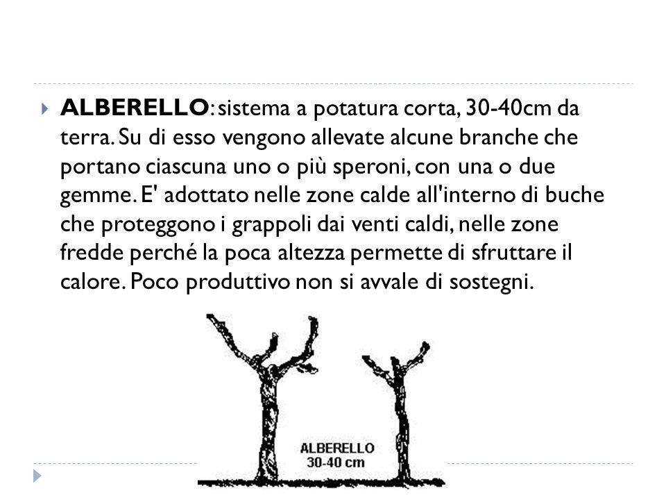 ALBERELLO: sistema a potatura corta, 30-40cm da terra