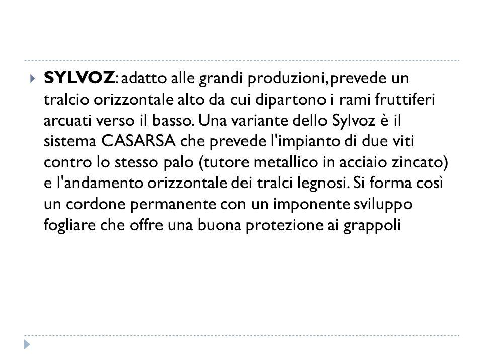 SYLVOZ: adatto alle grandi produzioni, prevede un tralcio orizzontale alto da cui dipartono i rami fruttiferi arcuati verso il basso.