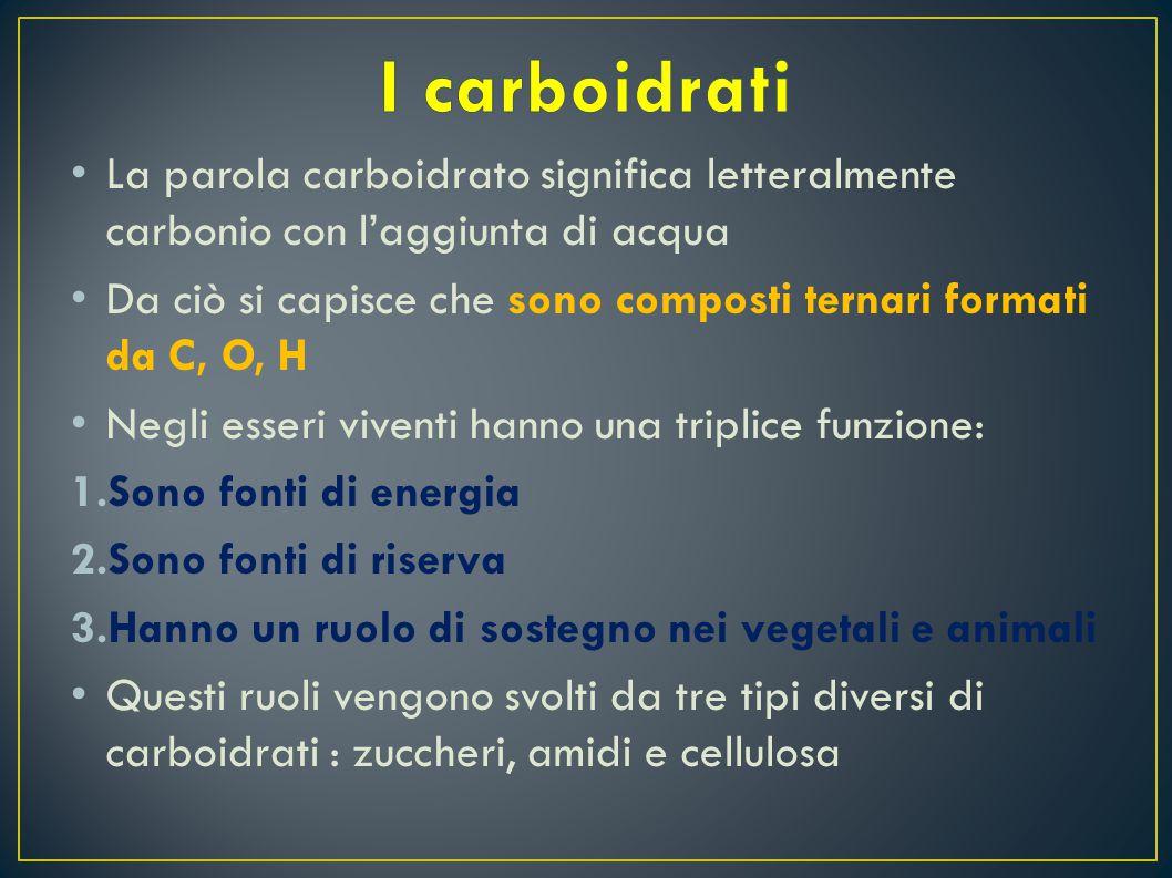 I carboidrati La parola carboidrato significa letteralmente carbonio con l'aggiunta di acqua.