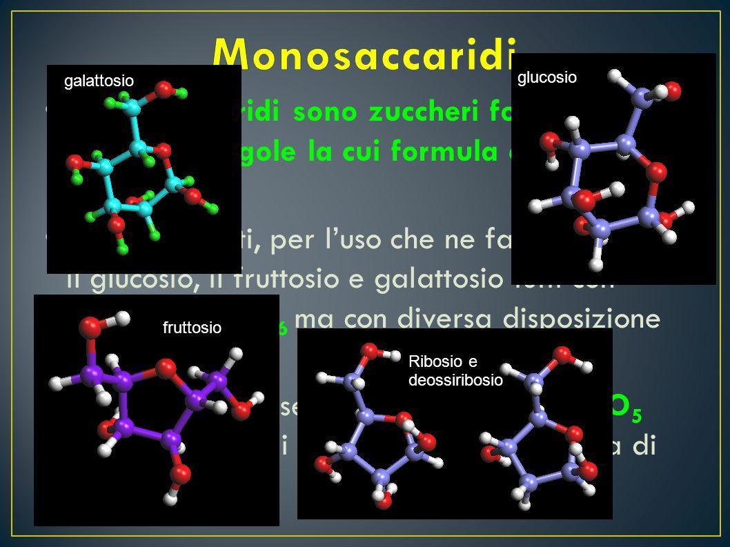Monosaccaridi galattosio. glucosio. I monosaccaridi sono zuccheri formati da molecole singole la cui formula chimica è Cn H2n On.