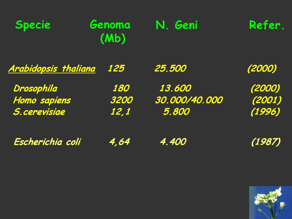 Specie Genoma (Mb) N. Geni Refer.