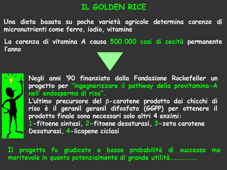 IL GOLDEN RICE Una dieta basata su poche varietà agricole determina carenze di micronutrienti come ferro, iodio, vitamine.