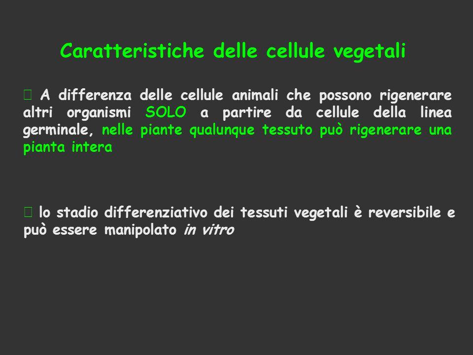 Caratteristiche delle cellule vegetali